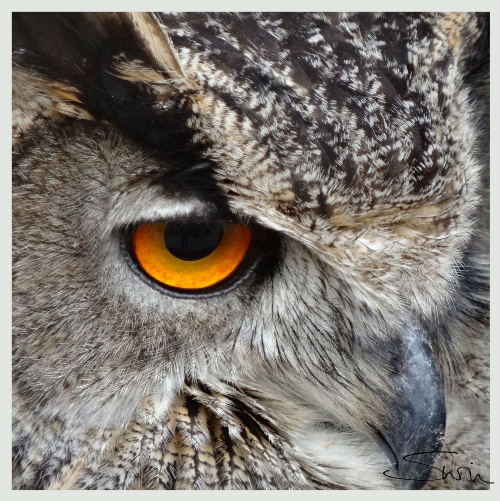 OWLlowres