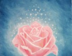 The Magical Pink Rose