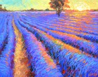 -Evening lavender field